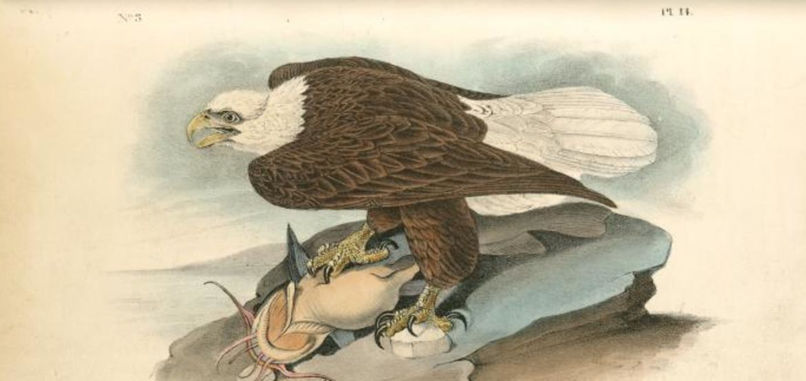 Cover Photo: Audubon, John