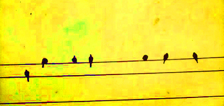 Cover Photo: BIRDS  by Christopher Woods