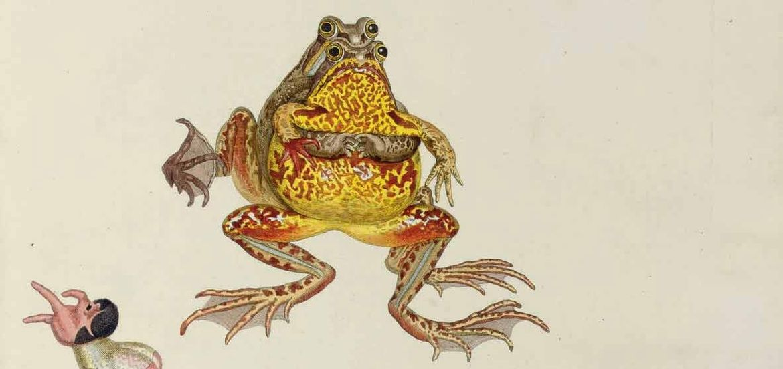 Cover Photo: Figure I of reproduction of amphibians: August Johann Rösel von Rosenhof, 1758