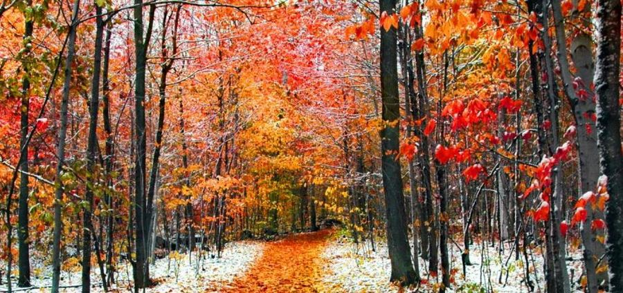 Cover Photo: Live as if you're November by Lauren Suval