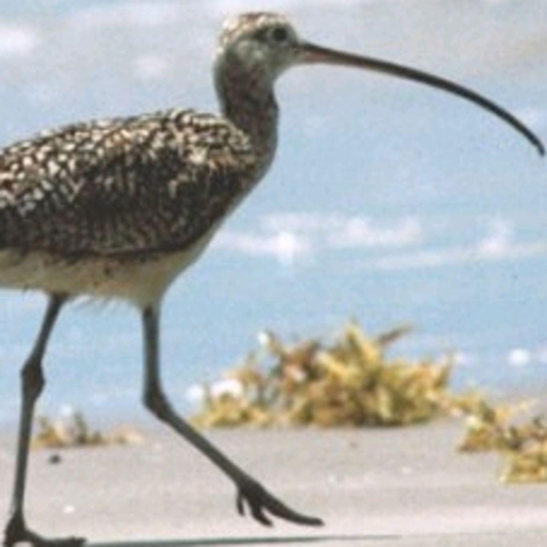 Cover Photo: The Story Of The Backward-Knee Bird by Patrick Macke