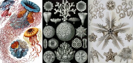 "Cover Photo: At left, ""Haeckel's most famous print."" Plates from Ernst Haeckel's Kunstformen der Natur (Artforms of nature) (1904) via Wikimedia Commons."