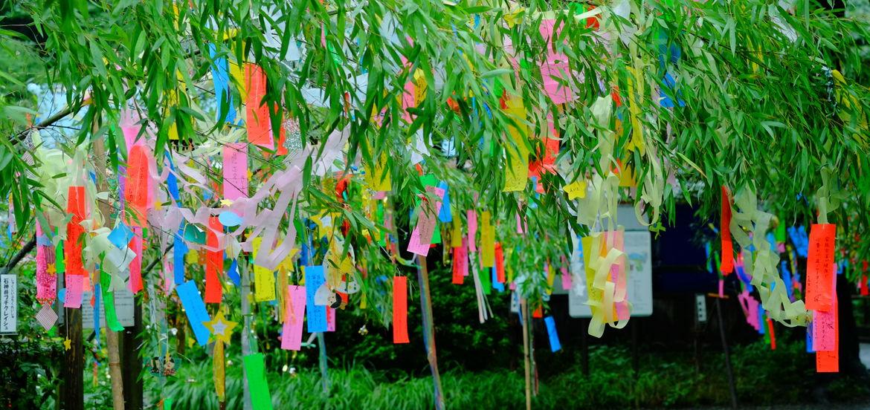 Cover Photo: photo of Tanabata tanzaku by Kumiko/wikimedia