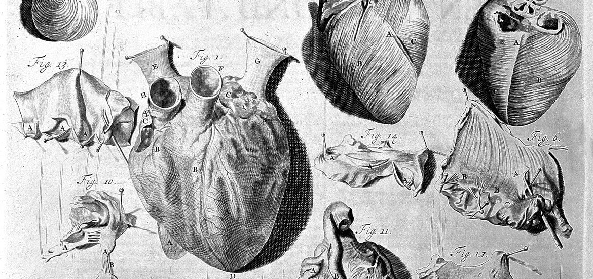 Cover Photo: Image courtesy Wellcome Images, operated by Wellcome Trust, via Wikimedia Commons
