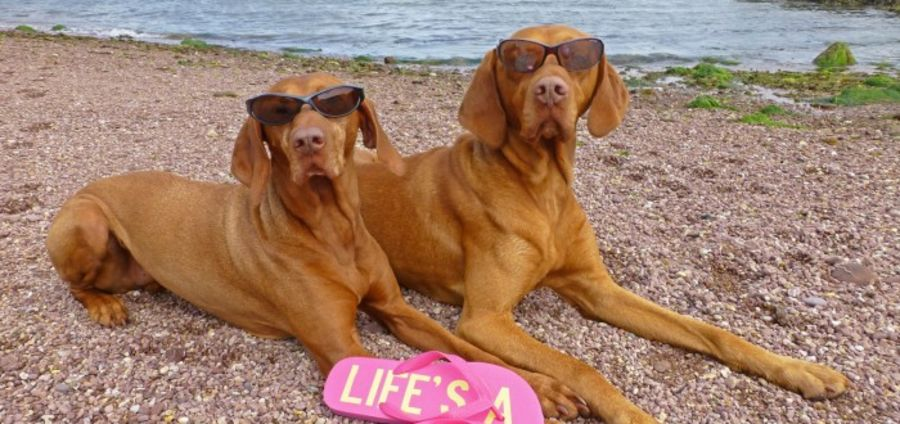 Cover Photo: Meet our worlds trendiest pets... by Holly Wilson