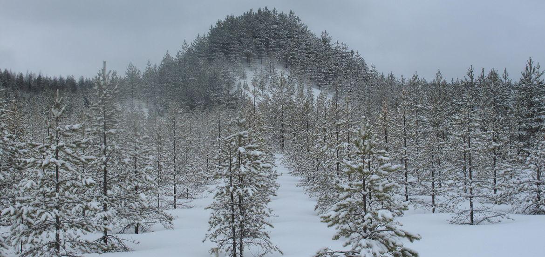 Cover Photo: Strata Suomi via Flickr